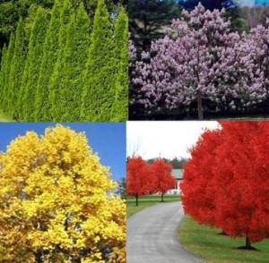 Fast Growing Trees for the Yard