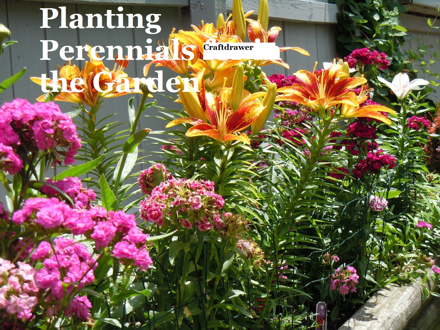 How to Grow Perennials for Summer