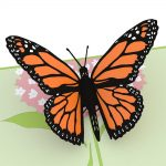 Send a Butterfly Pop up Card to Someone for a Birthday or Special Occasion